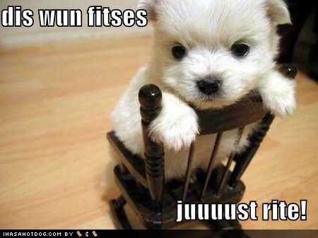 cutest-type-of-puppies1.jpg