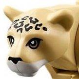 Leopard37